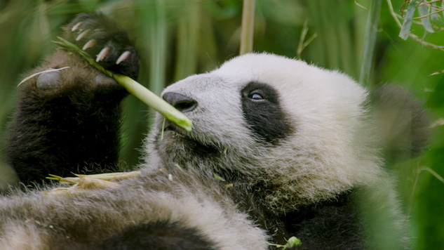 Best-bets for March 23: Nat Geo gives us China and the universe