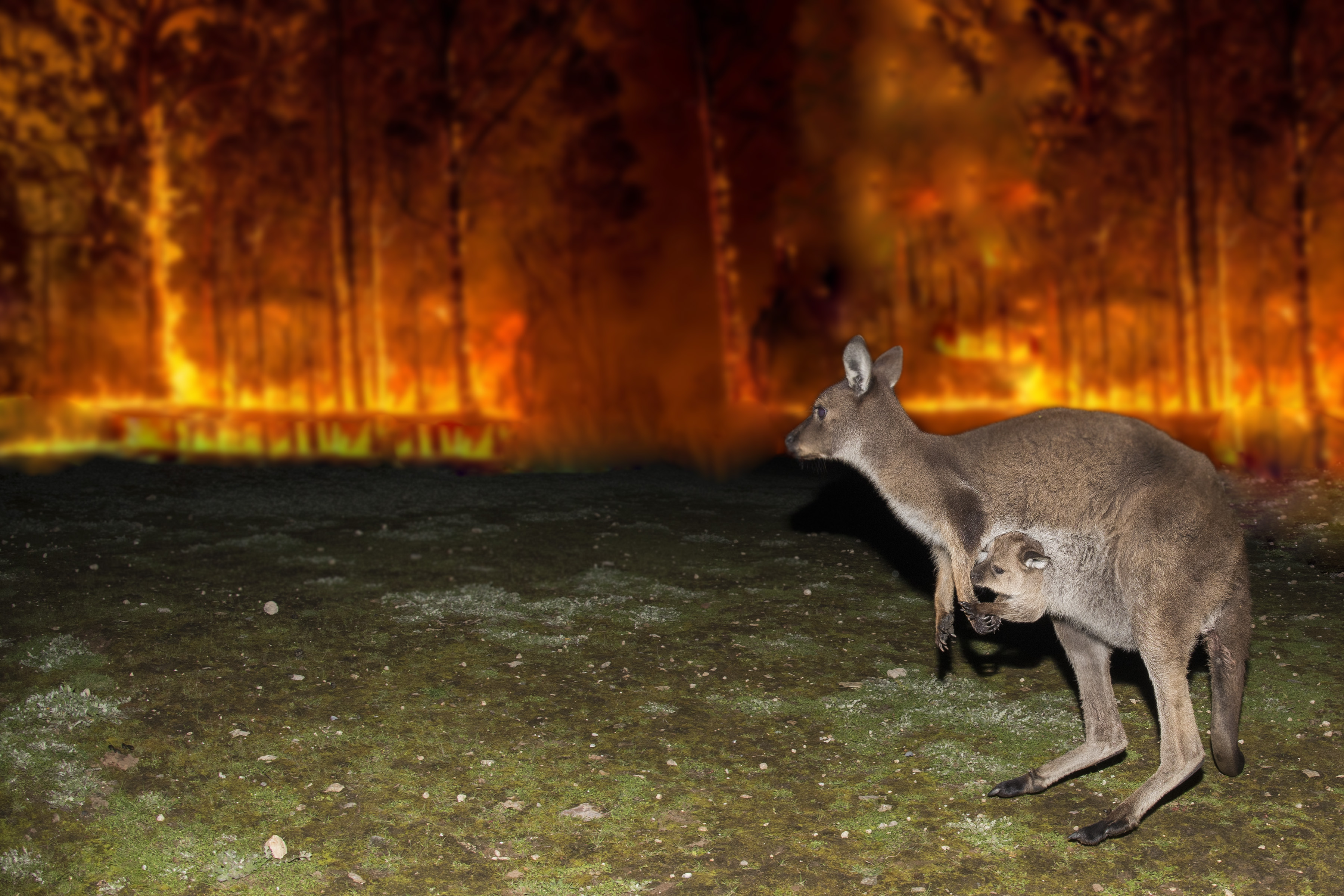 Amid the inferno: animal-rescue heroics