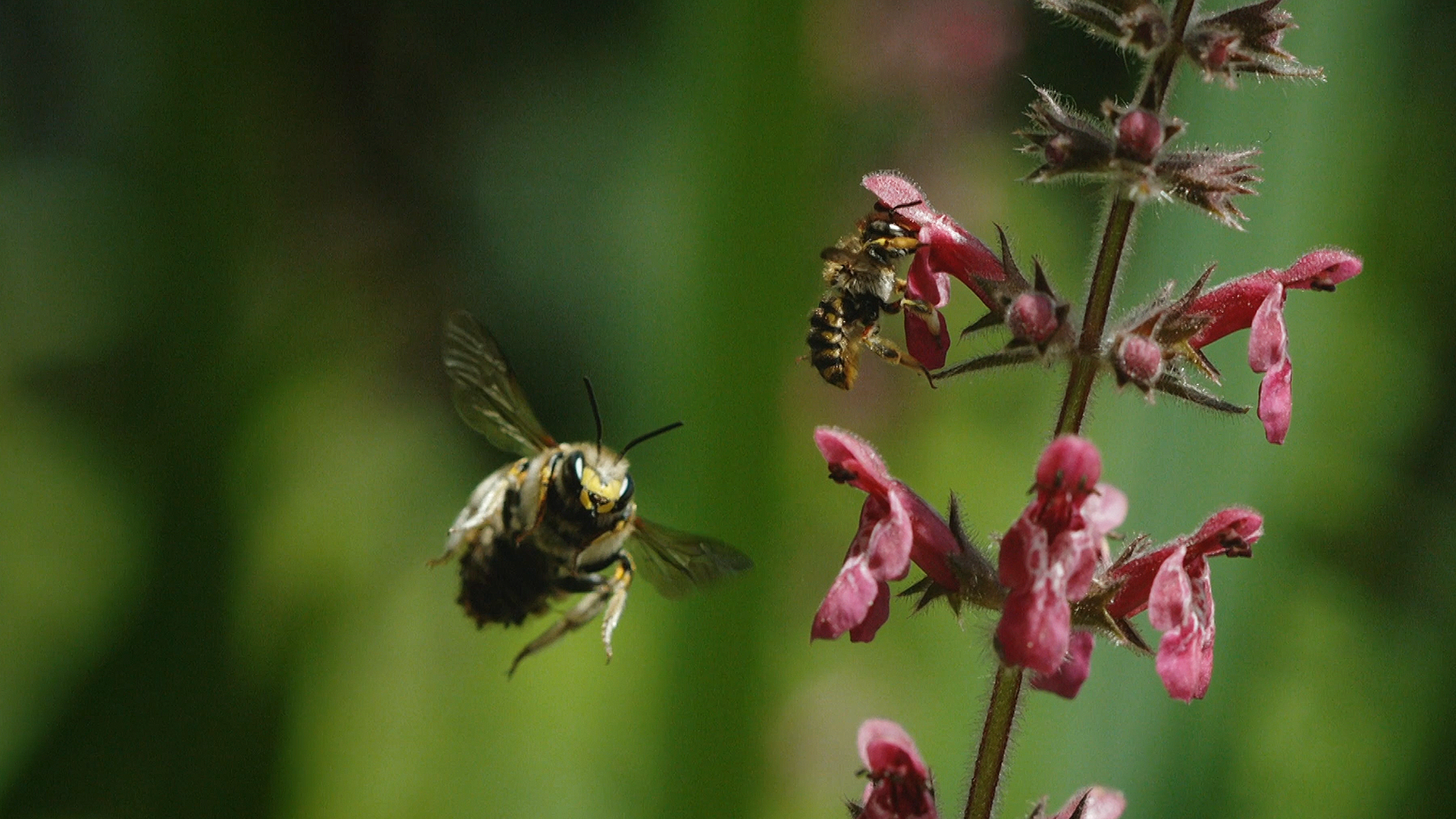 Best-bets for Oct. 20: great bees, troubled humans